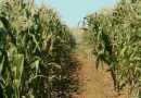 How SA small towns collapsing is starting to affectfarming